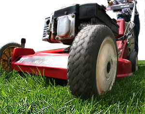 Services Lawn Care Maintenance Shrub Trimming Tree Service