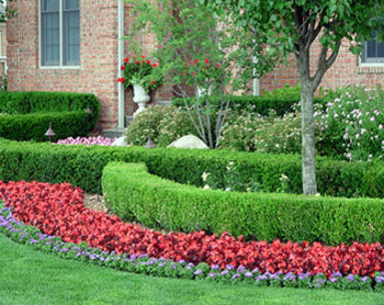 Services Lawn Care Maintenance Shrub Trimming Tree Service